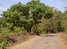 Canacona bypass with three bridges to be operational by June